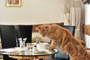 First-Cat-Cafe-Opens-In-Europe-1