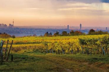 On the Vine: Raising The Curtain on Gemischter Satz