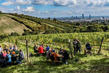 On the Vine: Take a Walk on the Wine Side